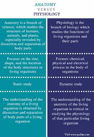 Anatomy And Physiology Definitions Difference Between Anatomy And Physiology Definition