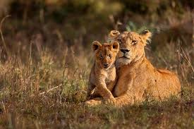wildlife images Famous national parks and wildlife sanctuaries of india oyo blog jpg