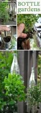 Wine Bottle Planters by Diy Wine Bottle Planter Diy Winebottle Planter Dan330 Http