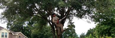 sago s landscaping tree services