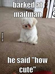 Funny Cute Animal Memes - top 30 funny animal memes and quotes quotes and humor