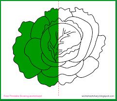 free drawing worksheets printable cabbage drawing worksheets