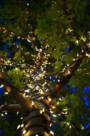 Stringing Lights In Backyard by Best 25 Lighted Trees Ideas On Pinterest Potted Trees Potted