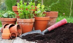 low light outdoor plants enjoy the garden red butte garden
