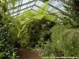 garten köln bilderbuch k禧ln botanischer garten flora subtropenhaus