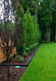 Landscaping Ideas For Backyard Privacy Backyard Privacy Landscaping Ideas 4ingo
