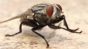 fly parasite complex unit of 15 000