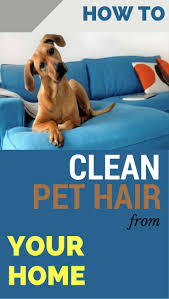 How To Remove Cat Hair From Clothes Furniture Remove Pet Hair From Furniture Remove Pet Hair From