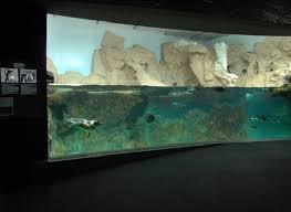 vasche acquario foto acquario di genova vasca pinguini di caravetta luigi 58991