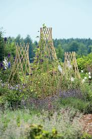 decorating using trellises for astounding garden decoration ideas