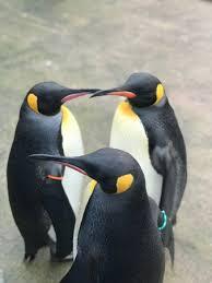 edinburgh zoo scotland tips photos
