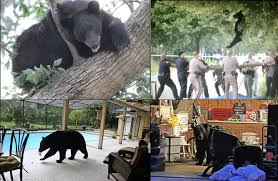 halloween city lake mary fl bears in central florida orlando sentinel