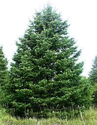 trees stuart u0027s landscaping u0026 garden center