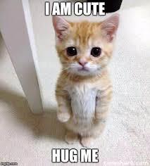 Cat Hug Meme - cute cat meme imgflip