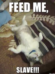 Feed Me Meme - feed me slave meme on imgur