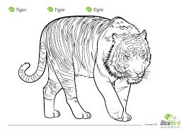 the tiger free printable colouring page for kids