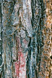 multi colored tree bark stock photo image of color conservation