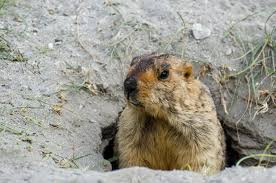 groundhog day archives lakeside collection blog