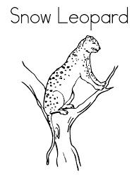 snow leopard coloring pages bltidm