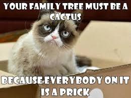 Success Cat Meme - 22 best grumpy cat images on pinterest funny stuff grumpy cat