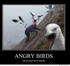 Angry Birds Meme - top 20 most funny angry birds memes and jokes angry birds
