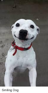 Smiling Dog Meme - 25 best memes about smiling dog smiling dog memes