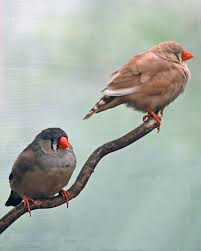 two birds on a branch photograph by diane bell