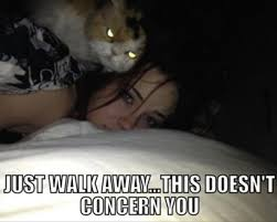 Evil Cat Meme - meet the world s top ten most evil cats playbuzz