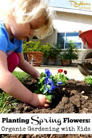planting spring flowers organic gardening with kids rhythms of play