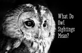 Backyard Animals Lyrics Owl Symbolism U2014what Does It Mean When You See An Owl Exemplore