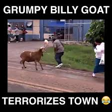 Billy Goat Meme - grumpy billy goat terrorizes town video dailymotion