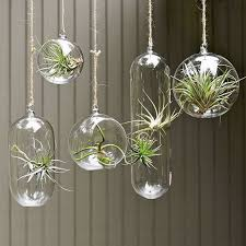 decorating home with indoor plants stylewhack