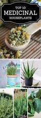 House Plant Ideas by Best 25 Common House Plants Ideas On Pinterest Plants Indoor