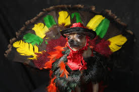 thanksgiving jokes 2015 25 riddles and one liners for