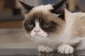 Tard The Cat Meme - grumpy cat movie popular internet meme inks hollywood movie deal