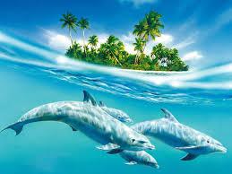 24 gorgeous collection of dolphin desktop wallpaper designinstance