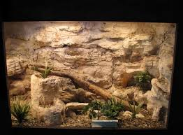 59 best reptile terrarium inspiration images on pinterest