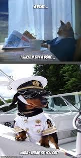 Cat Buy A Boat Meme - funny cat buy a boat funny pics story