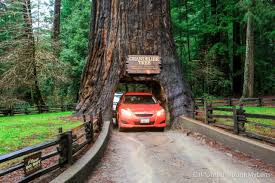 Chandelier Tree Address Pacific Coast Highway Where To Stop On Your Road Trip