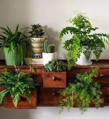 best 25 indoor ferns ideas on pinterest indoor plant decor