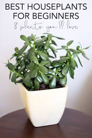 best house plants common house plants for beginners 8 plants you ll love