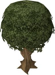 Fruit Trees Runescape - sassafras tree runescape wiki fandom powered by wikia
