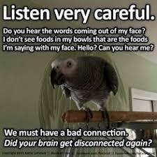 Parrot Meme - so like my gray birds pinterest grey bird and beautiful birds
