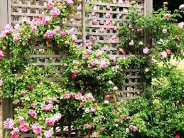 wood rose trellis u2014 indoor outdoor homes best rose trellis ideas