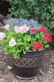 diy 5 gallon bucket patio container tomato planter spray a 5