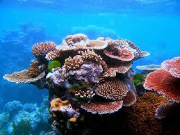Coral Reefs Of The World Map by Coral Wikipedia