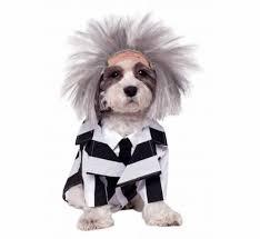Halloween Costume Beetlejuice 27 Funniest Pet Halloween Costumes Today