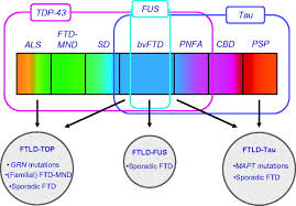 clinical genetic and pathological heterogeneity of frontotemporal