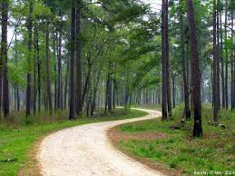 Texas forest images 5 beautiful national forests and preserves in texas jpg