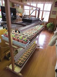 seed starting easy setups for home gardeners organic gardening
